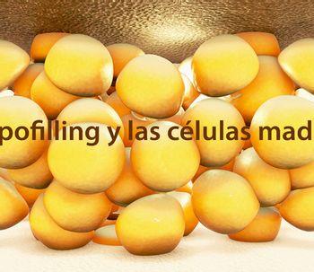 El lipofilling y las células madre