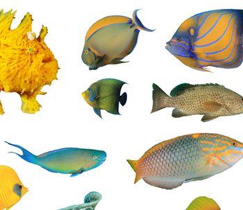 Los peces también pasan por el quirófano en Singapur