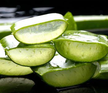 Aloe vera: el mejor aliado para el cuidado de tu cuerpo