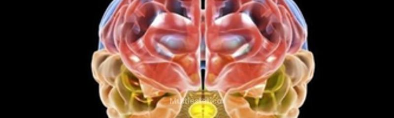 fisiohome3