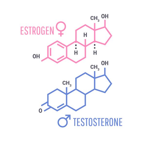 hormonas masculinas y femininas